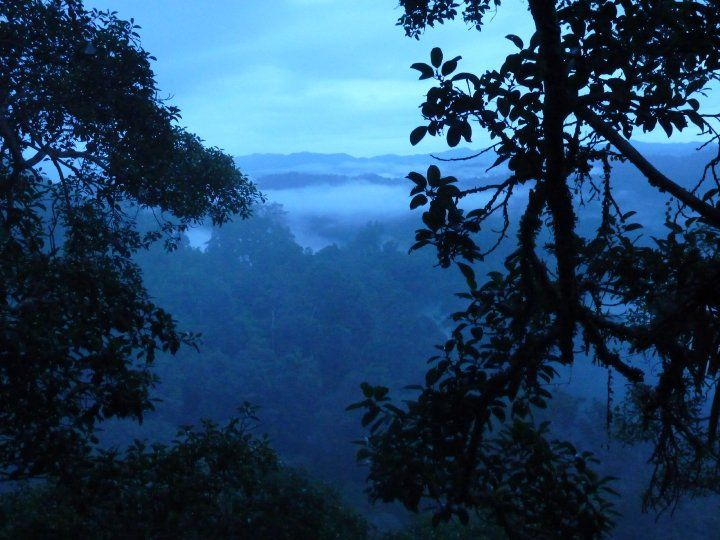 Tree house view - Jungle Laos