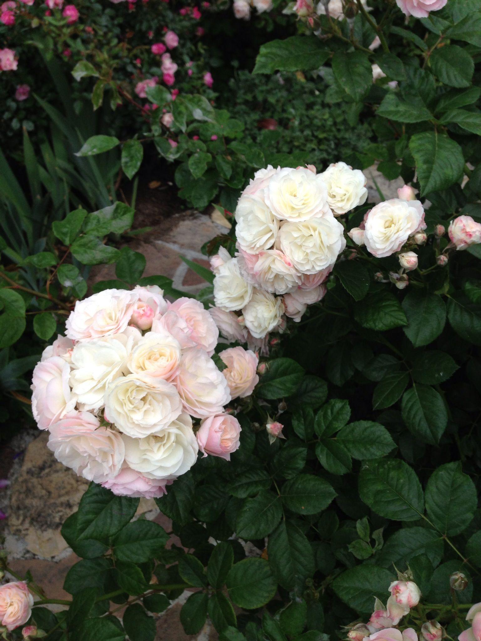 bouquet parfait by louis lens a very favorite rose floral arrangements pinterest parfait. Black Bedroom Furniture Sets. Home Design Ideas