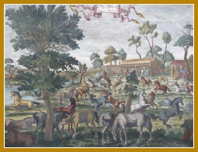 """""""Fohlenhof"""" Kupferstich von William Cavendish, 1. Duke of Newcastle (1592-1676), 1700"""
