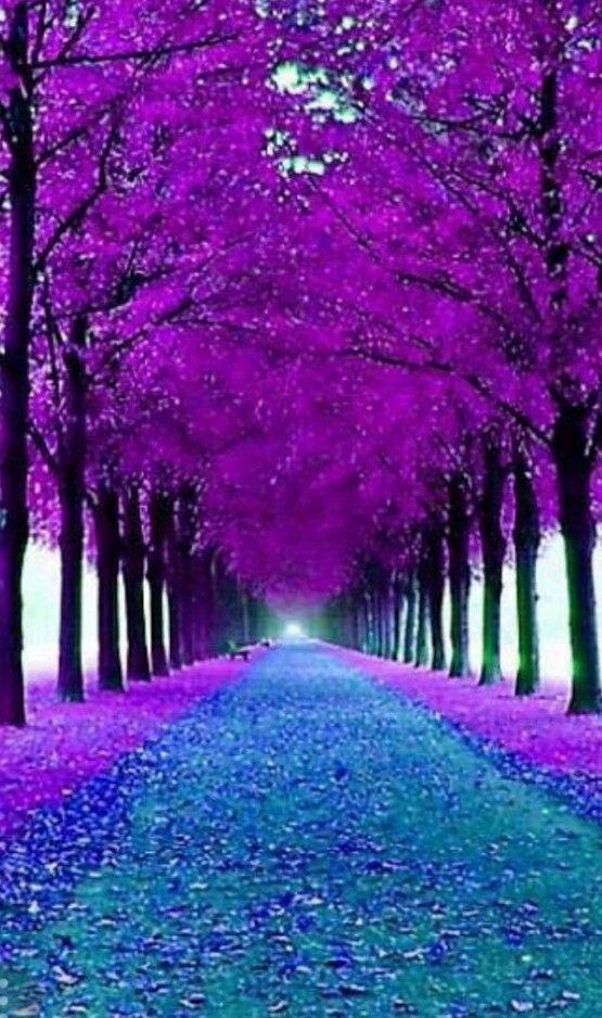Follow Nedimakahrimanov Nature Cool Beauty Beautiful Follow Follow4follow Beautiful Landscapes Beautiful Nature Nature