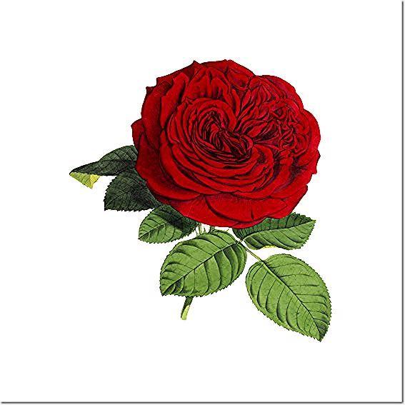 Beautiful Red Rose Flower • Love & Beauty Symbol - Red Rose - Posters and Art Prints   TeePublic    #wallart #poster #wallarts #art #posters #home #decor #homedecor #homestyle #style #homeideas #new #ideas #gifts #redrose #rose #flower #flowers #garden #summer rote Rose,  rose rouge,  Rosa roja,  Rosa vermelha,  rosa rossa,  赤いバラ,  czerwona róża,  rode roos,  Красная роза,  röd ros,  rød rose,  punainen ruusu,  červená růže Affiche, Póster, Manifesto, ポスター、Affisch, Plakat, Plakát, Juliste, 포스터,