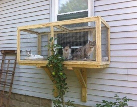 Astounding Screened Cat Window Diy Catio These Cats Are In Heaven Creativecarmelina Interior Chair Design Creativecarmelinacom