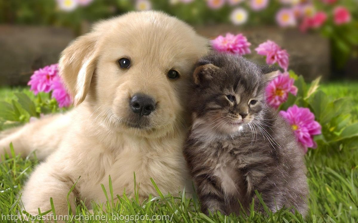 Dogs And Puppies Cats Kittens Backgrounds Pictures Of For Laptop