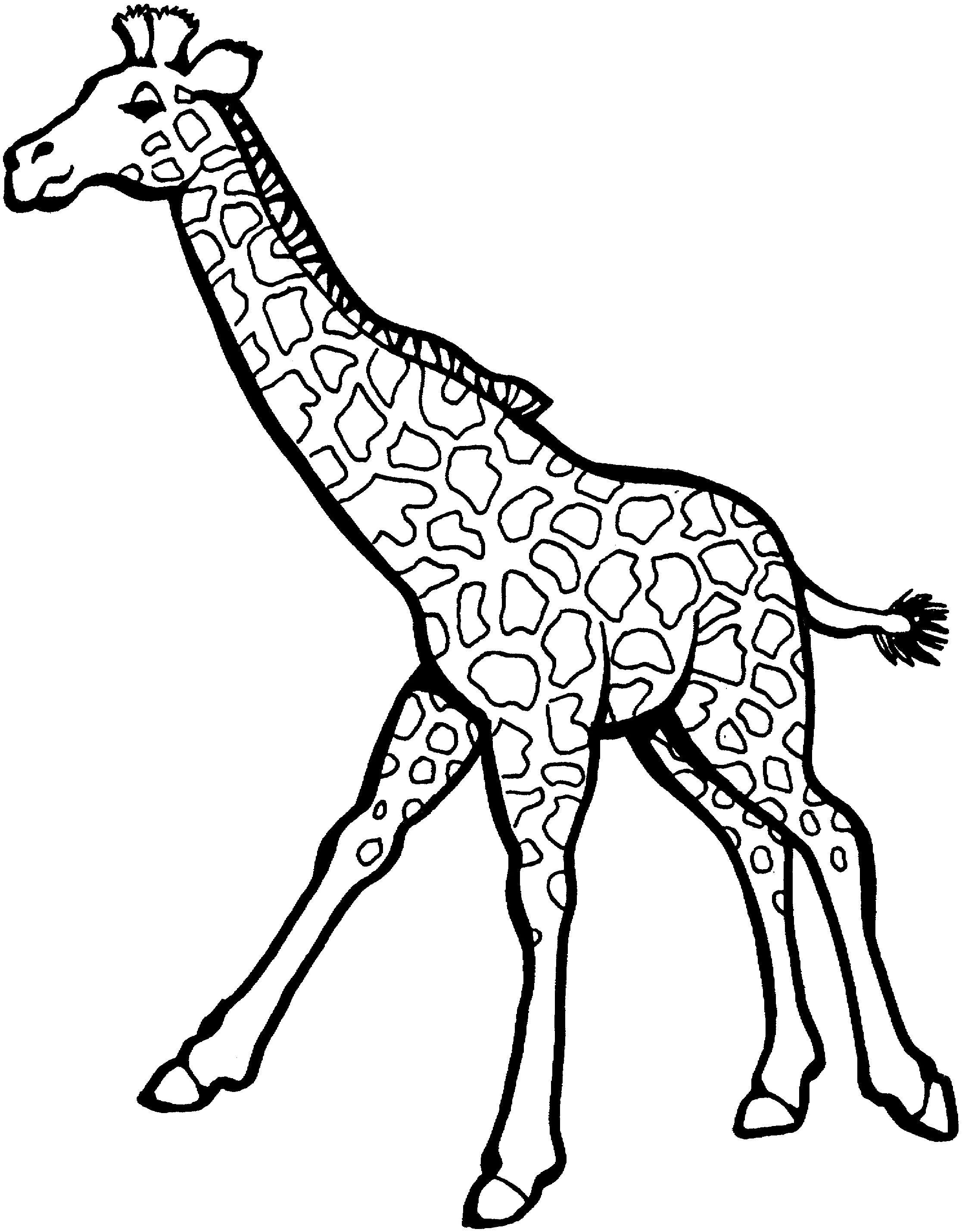 Fast Moving Giraffe | Giraffes | Pinterest