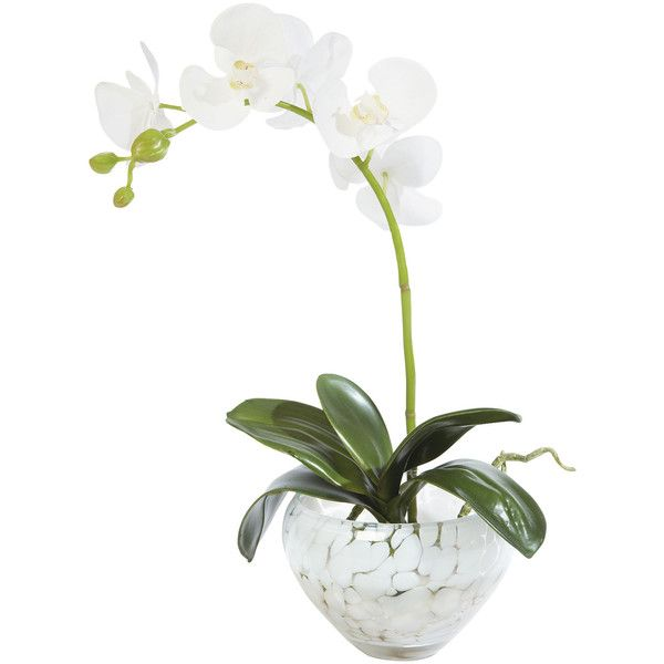Ethan Allen Petite Orchid in Spotted Vase (925 CNY) ❤ liked on Polyvore featuring home, home decor, floral decor, decor, flowers, flower home decor, flower stem, handmade home decor, glass home decor and glass flower stems