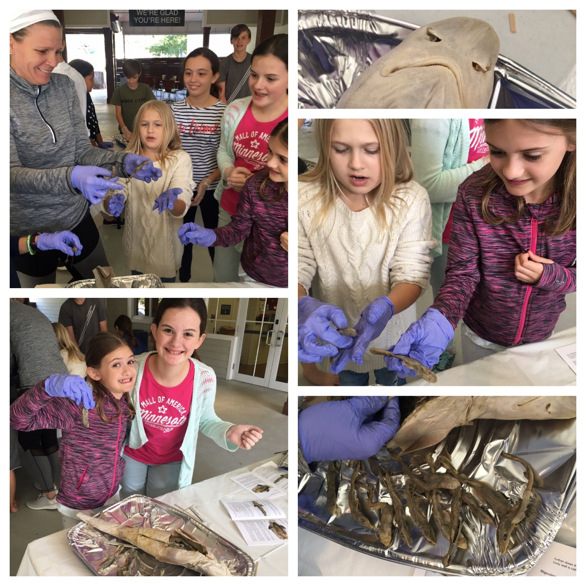 Dissection Of A Dogfish Shark Week 14 Of Challenge A