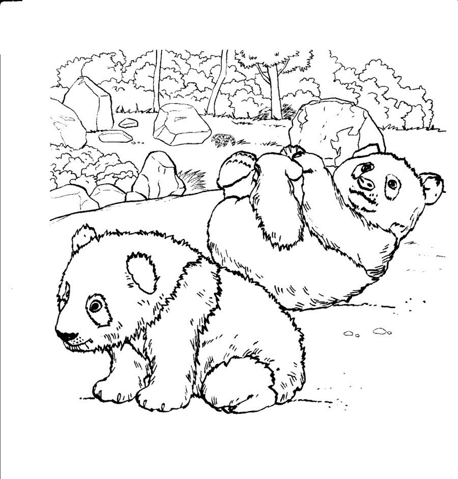 Coloring Rocks Bear Coloring Pages Animal Coloring Pages Panda Coloring Pages
