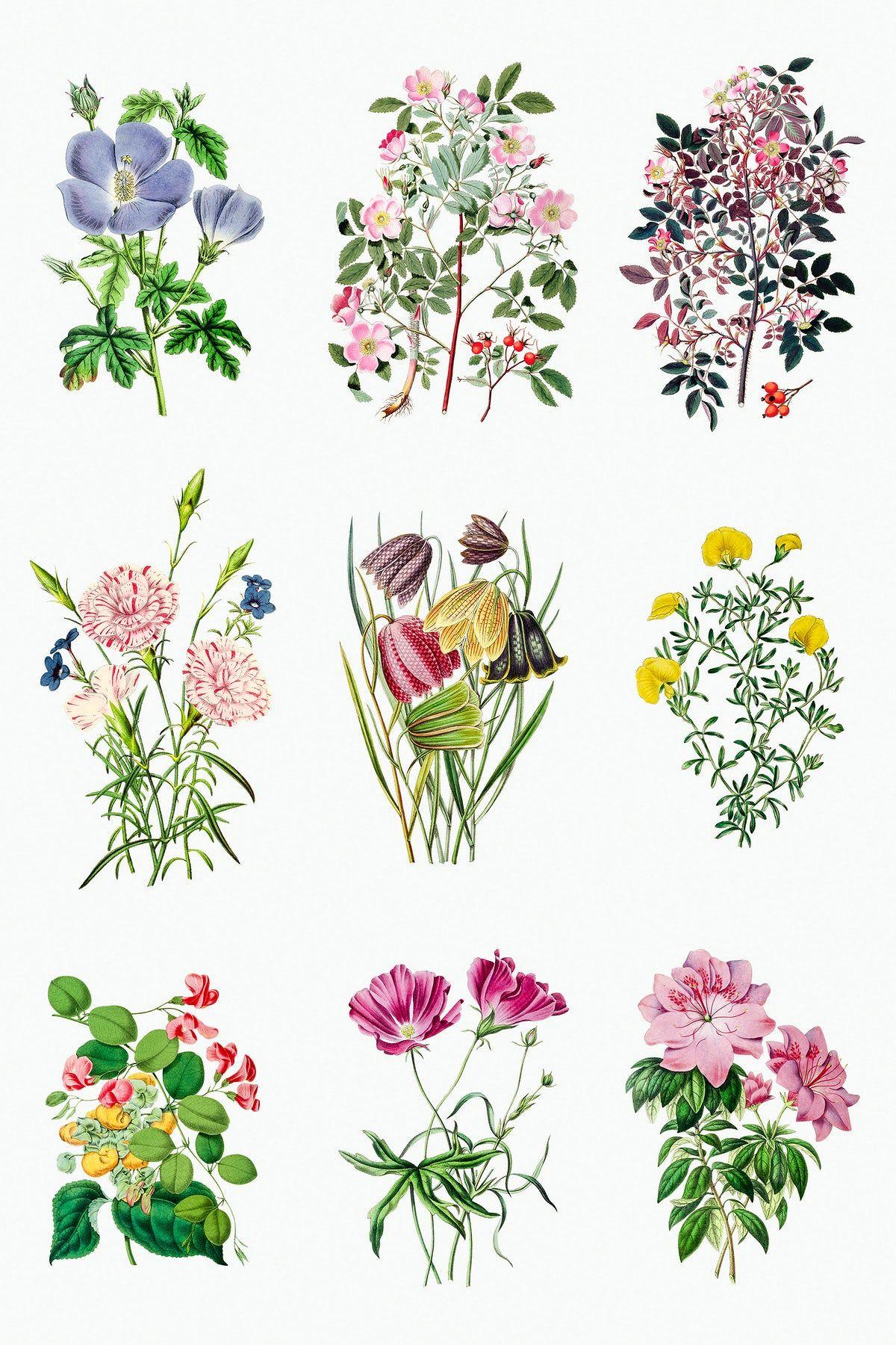 Download Premium Illustration Of Vintage Tropical Flower Design Element In 2020 Flower Printable Tropical Flowers Design Element