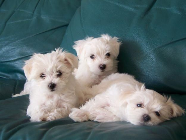 Come to Puppy City! Puppies for sale in Brooklyn, New York