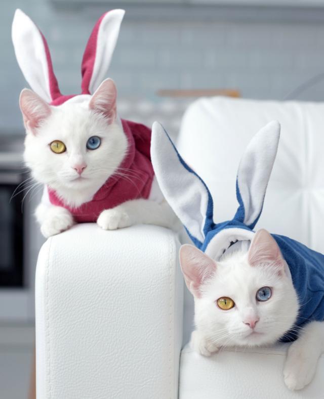 PHOTOS Adorable twin cats showcase their fascinating eye