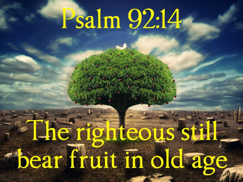 Image result for psalm 92:14