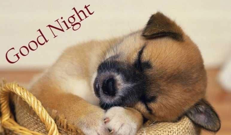 50 Good Night Images Free Download With Gud Goodnight Wallpaper Hd Tech Unblocked Baby Animals Pictures Puppy Dog Pictures Sleeping Puppies Dog love wallpaper hd download