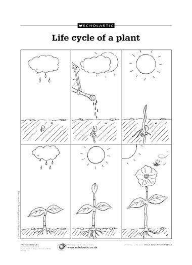 Caring For My Plant Kindergarten Coloring Worksheet Plants Worksheets Plants Kindergarten Coloring Worksheets For Kindergarten