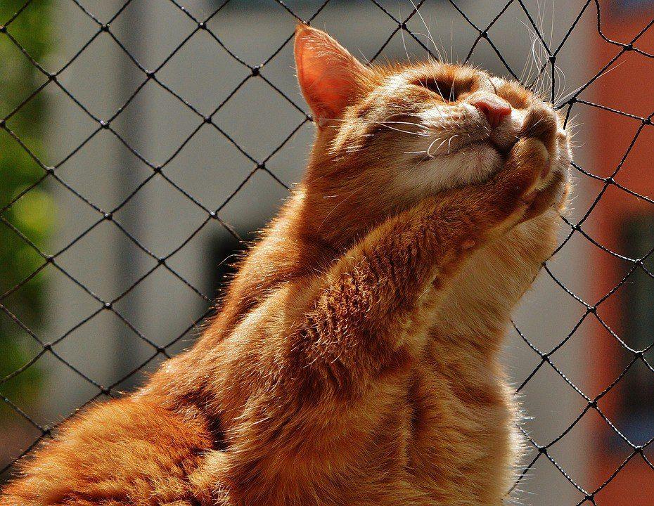 Пин от пользователя Ira Belavina на доске Ginger cats