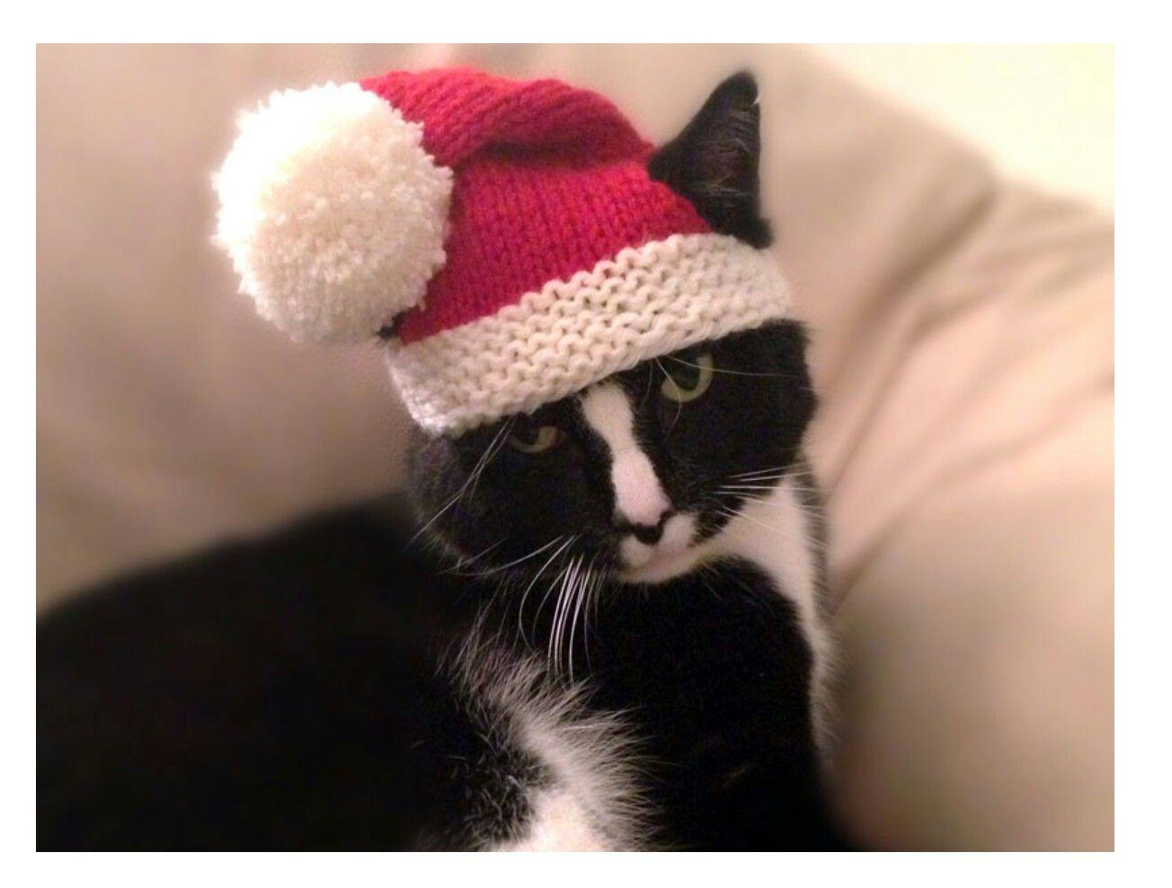 Pin de katie williams en Christmas, winter | Pinterest