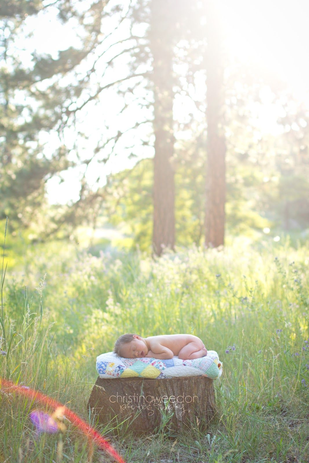 Dandelions on the Wall: Christina Weedon Photography {outdoor newborn session}