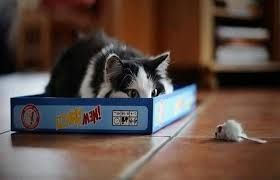 Image result for cats pouncing
