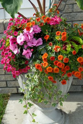Beautiful Container Garden Love The Plant Combination And All Bright Colors