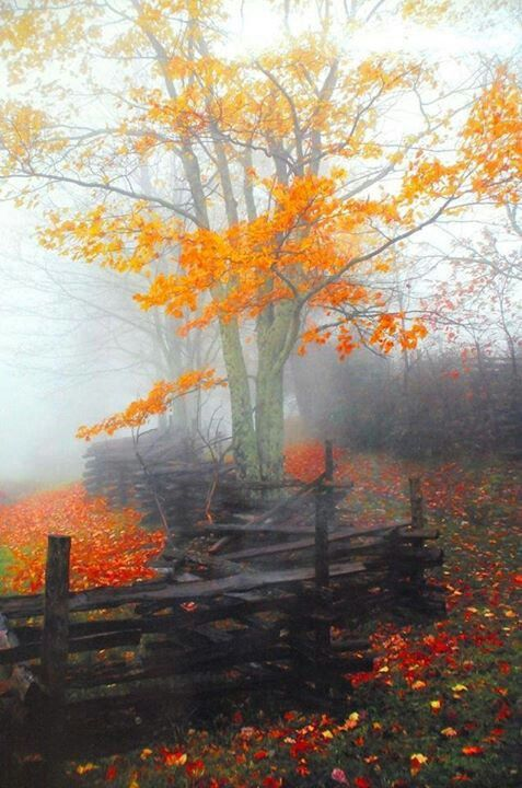 Autumn with a zigzag split rail fence #fall #leaves #fence