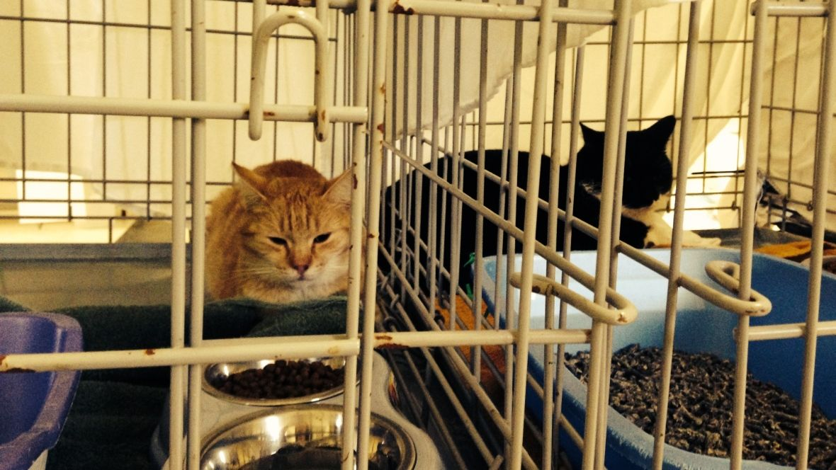 Feral cat problem to be tackled at sackville manor feral