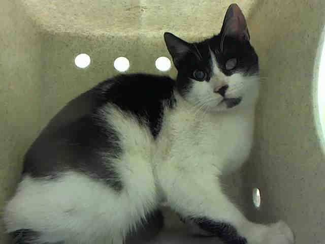 *Pulled by Staten Island Hope* NYC TO BE DESTROYED