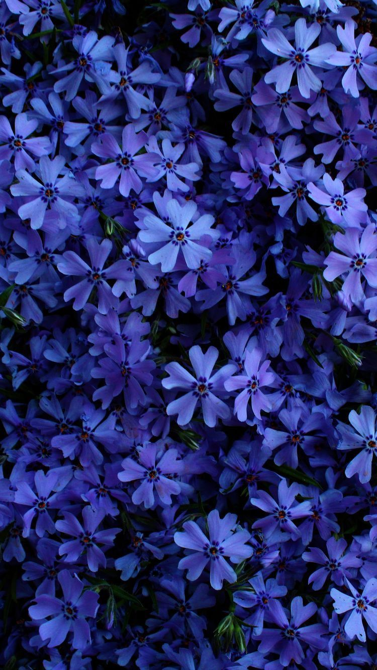Cvet Nastroeniya Sinij Korolevskij Sinij Vasilkovyj Sineva Kolor Cvet Pantone Trenl 2020 Beautiful Flowers Wallpapers Blue Flower Wallpaper Beautiful Flowers