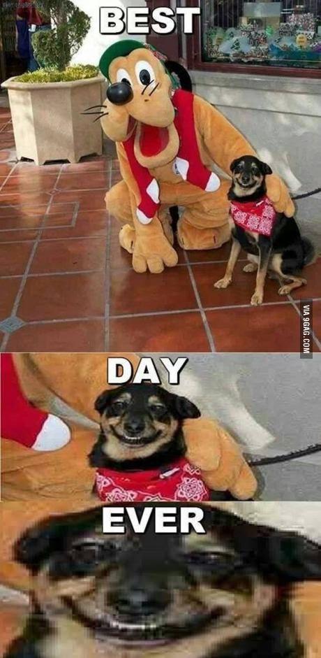 Best Day Ever Lustige Humor Bilder Ausgestopftes Tier Wtf Lustig