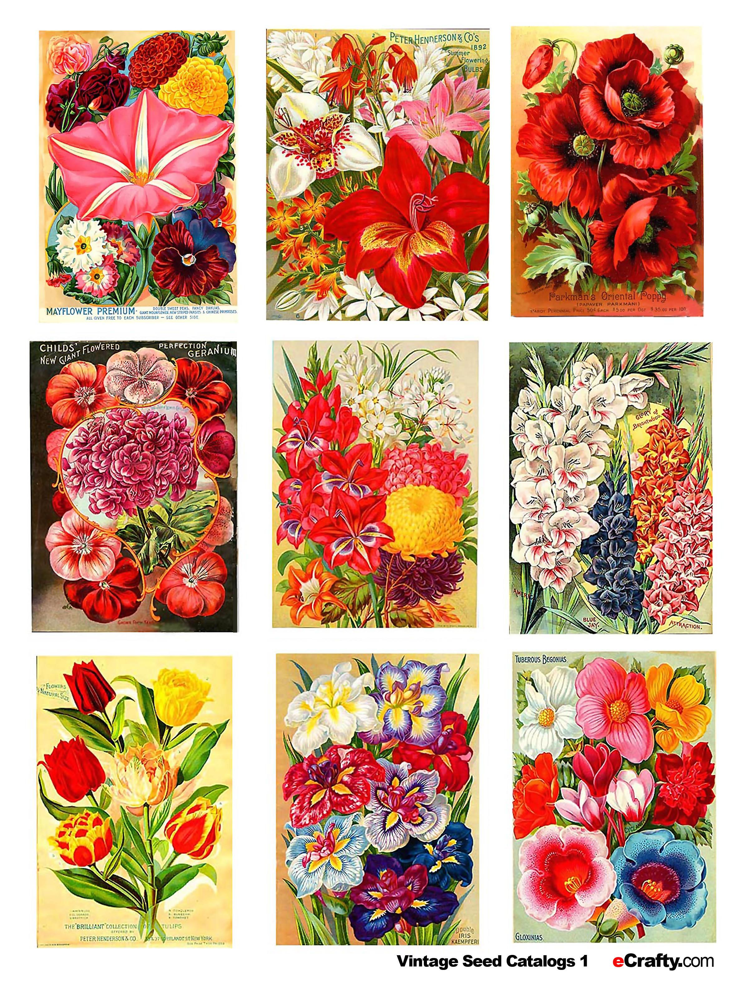 Printable Vintage Seed Packets Would Make A Beautiful