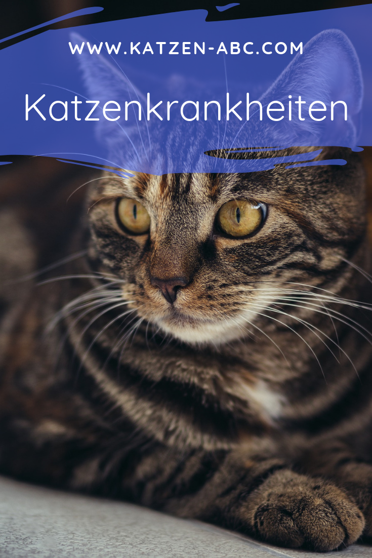 Katzenkrankheiten Was Tun Wenn Mietze Sich Nicht Wohl Fuhlt Katzenkrankheiten