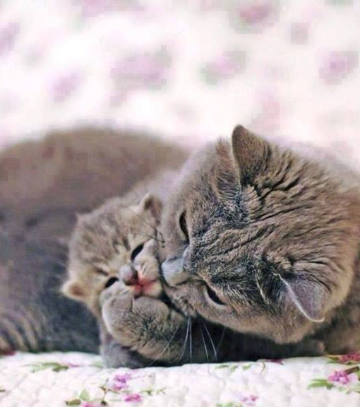 cat mom with little baby ♥ Chats et chatons, Chats