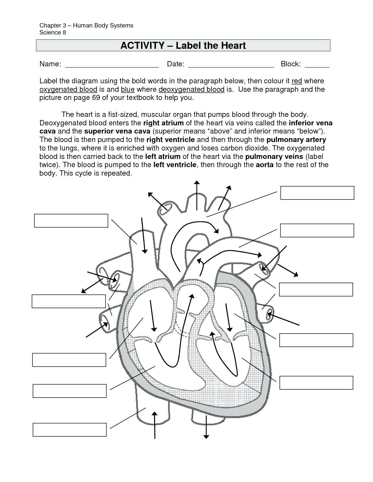 Image Result For Anatomy Labeling Worksheets With Images Heart