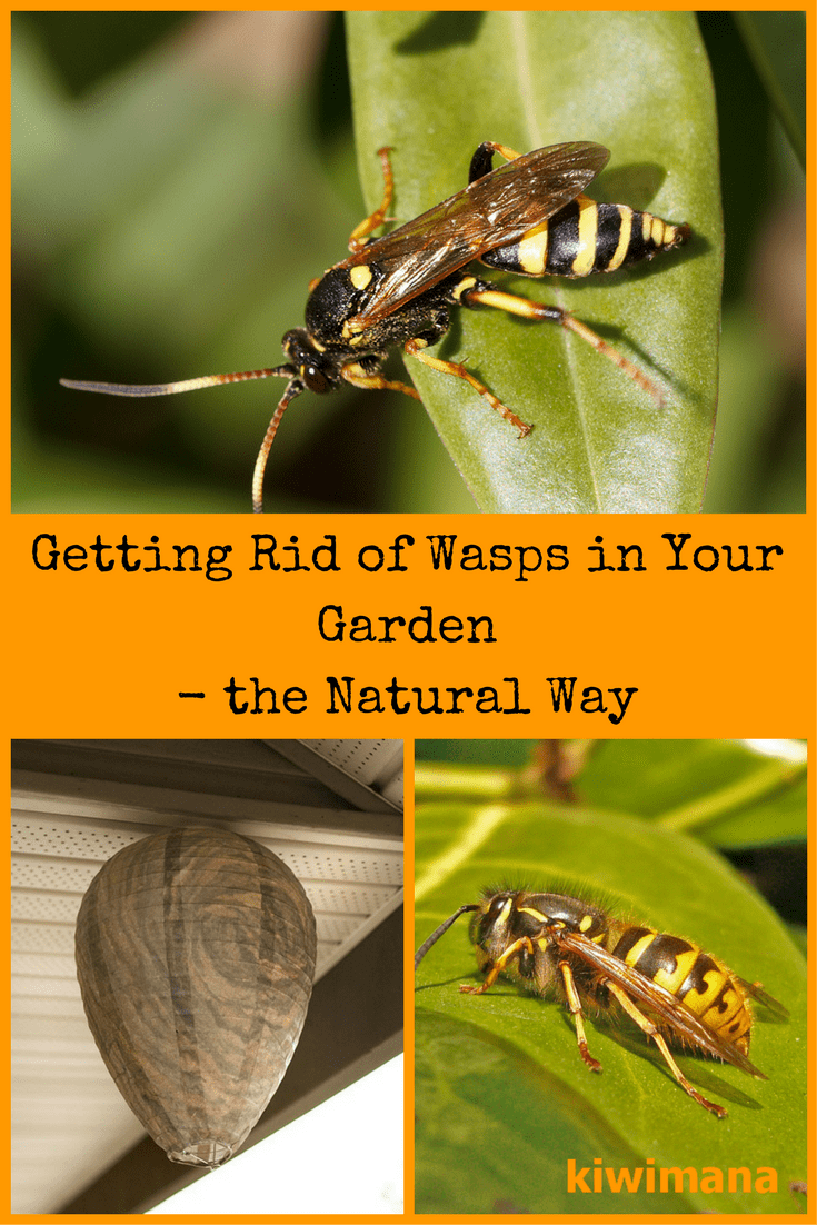 How to Get Rid of Wasps in Your Garden: the Natural Way ...