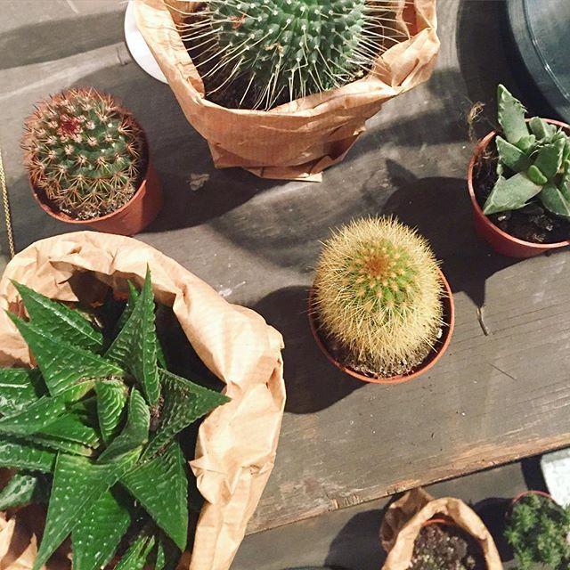 #cactus #welovethiscity #thehague #interior #interieur #littlesmilemakers