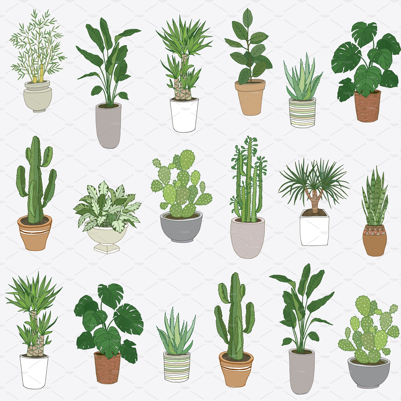 Indoor Plants Plant Painting Plants Plant Art