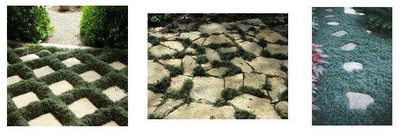 Dwarf Grasses Landscaping Dwarf mondo grass gardening and landscaping pinterest dwarf dwarf mondo grass workwithnaturefo