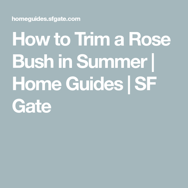 How To Trim A Rose Bush In Summer Trim Rose Bushes Rose Bush How To Trim Roses
