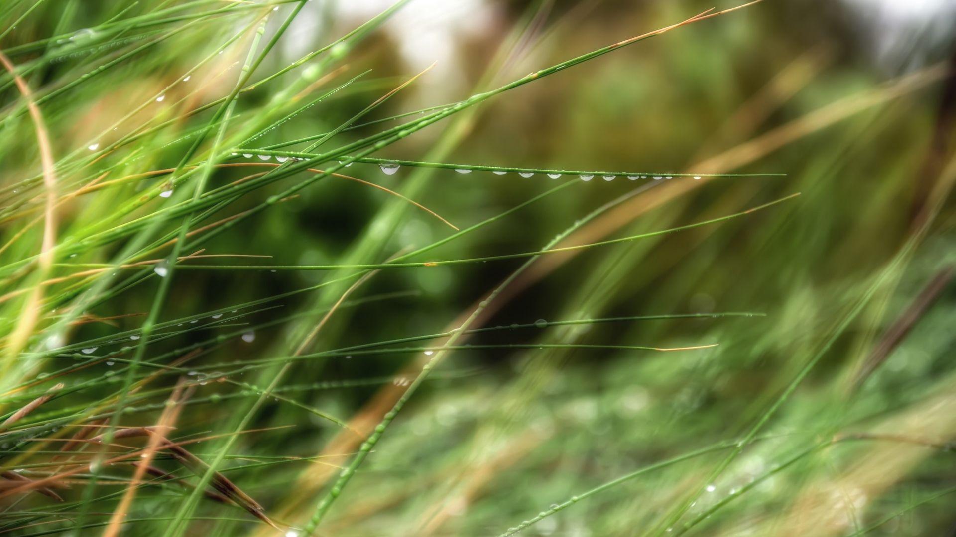Download Wallpaper 1920x1080 Drops Grass Dew Summer Rain Full Hd 1080p Hd Background Nature Wallpaper Hd Backgrounds Church Backgrounds