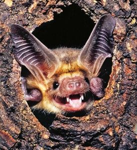 this is a silly silly bat