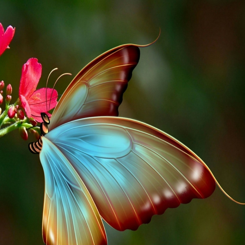 Sebastien S Favorite Images From The Web In 2020 Beautiful Butterflies Butterfly Pictures Colorful Butterflies