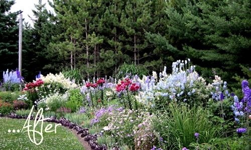 Before & After: Plant Paradise Border | Perennial garden ...