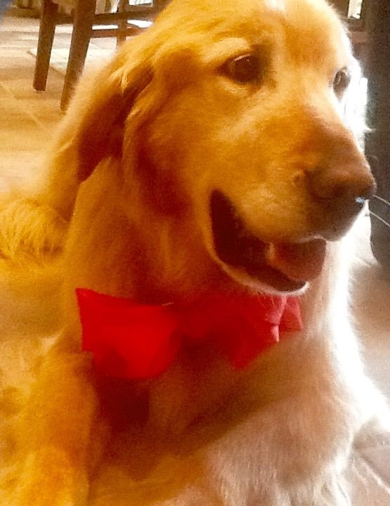 Went to my cousins graduation party last weekend. Even Romeo (the dog above) got all dressed up like a gentlemen! #iloveit