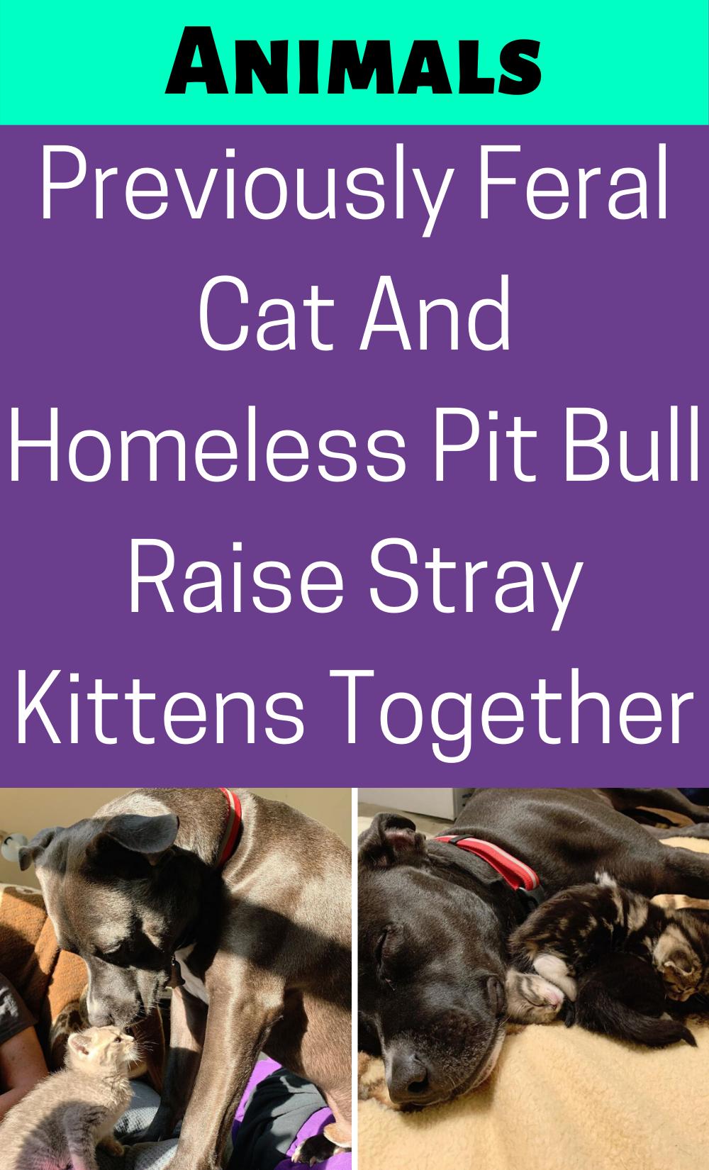 Pin On Animal And Pets