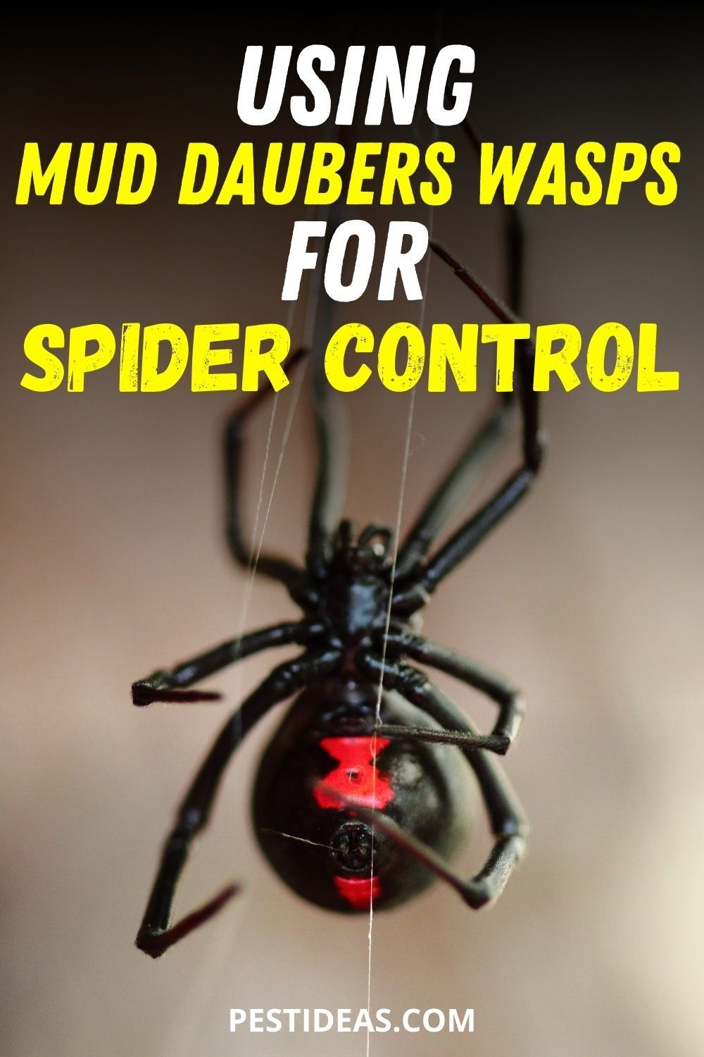Using Mud Dauber Wasps For Spider Control Wasp Spider Control Get Rid Of Wasps