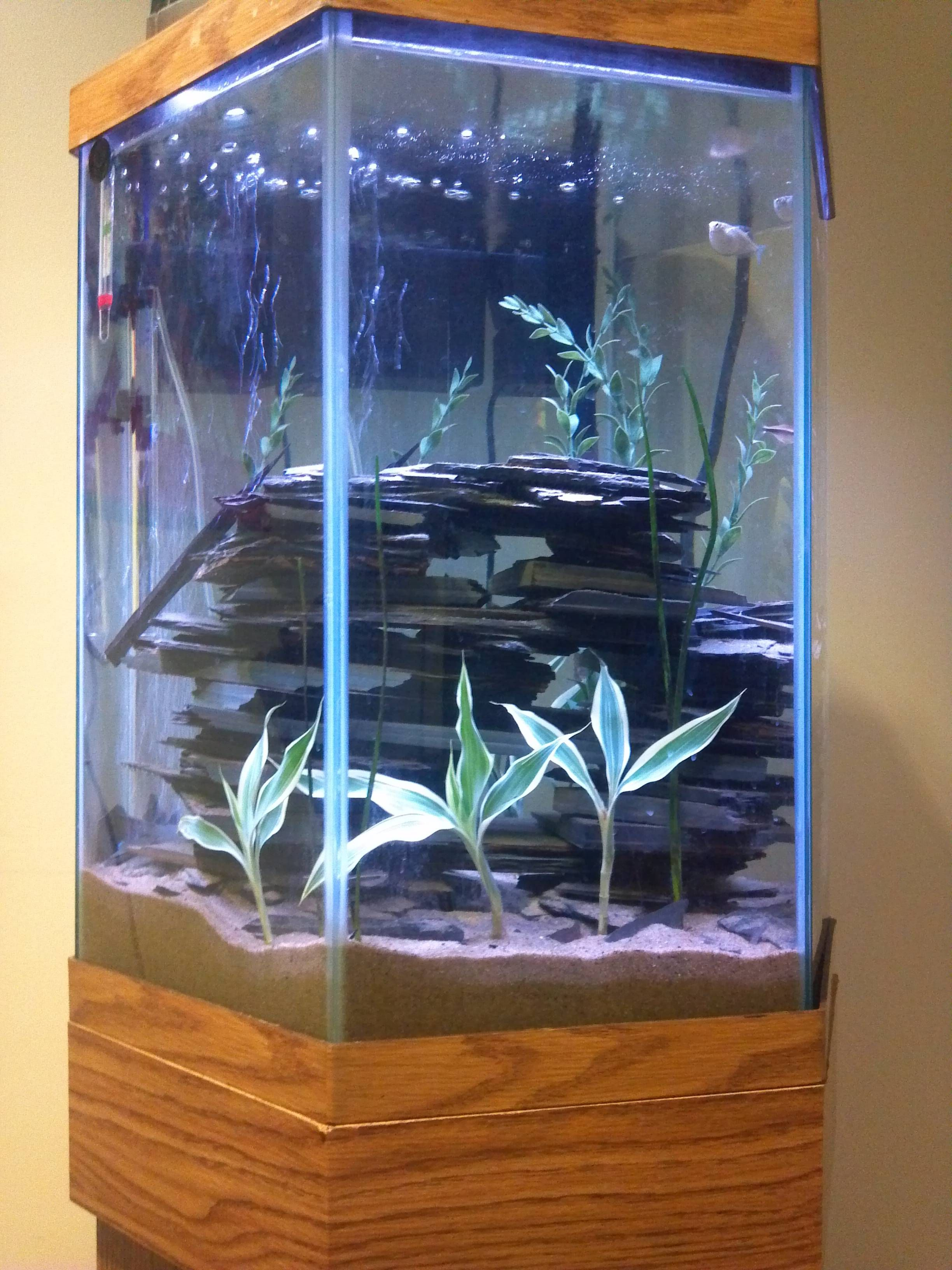 Hexagonal tank with rock stacking Aquascapes