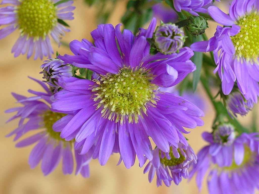 Summer Flowers Wallpaper DesktopFlower