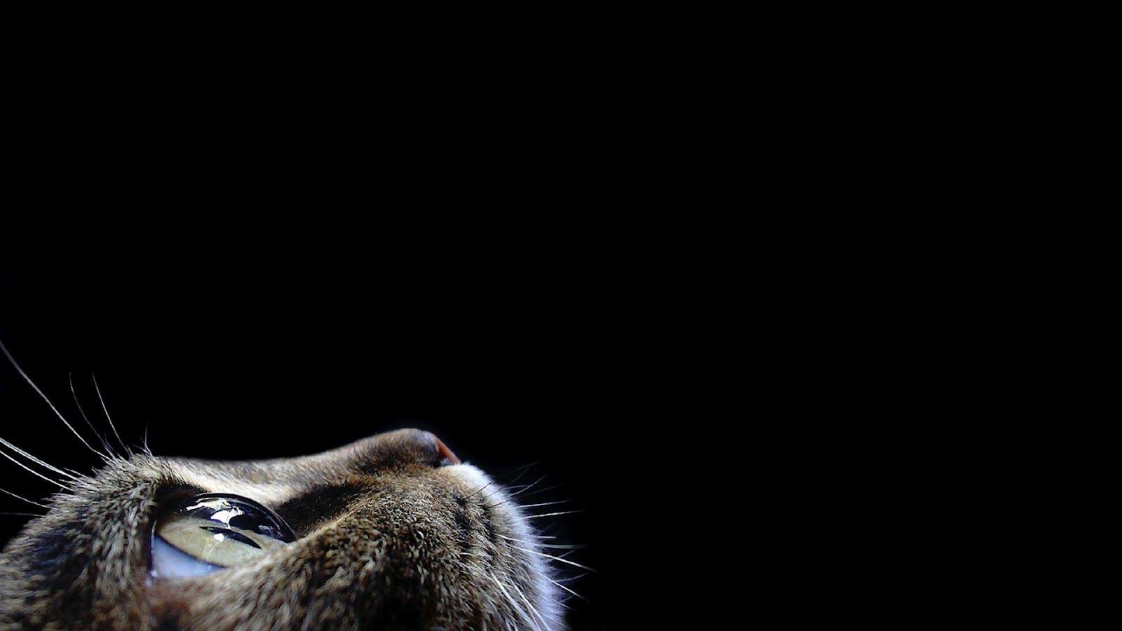 Black Cat Face Desktop Wallpaper