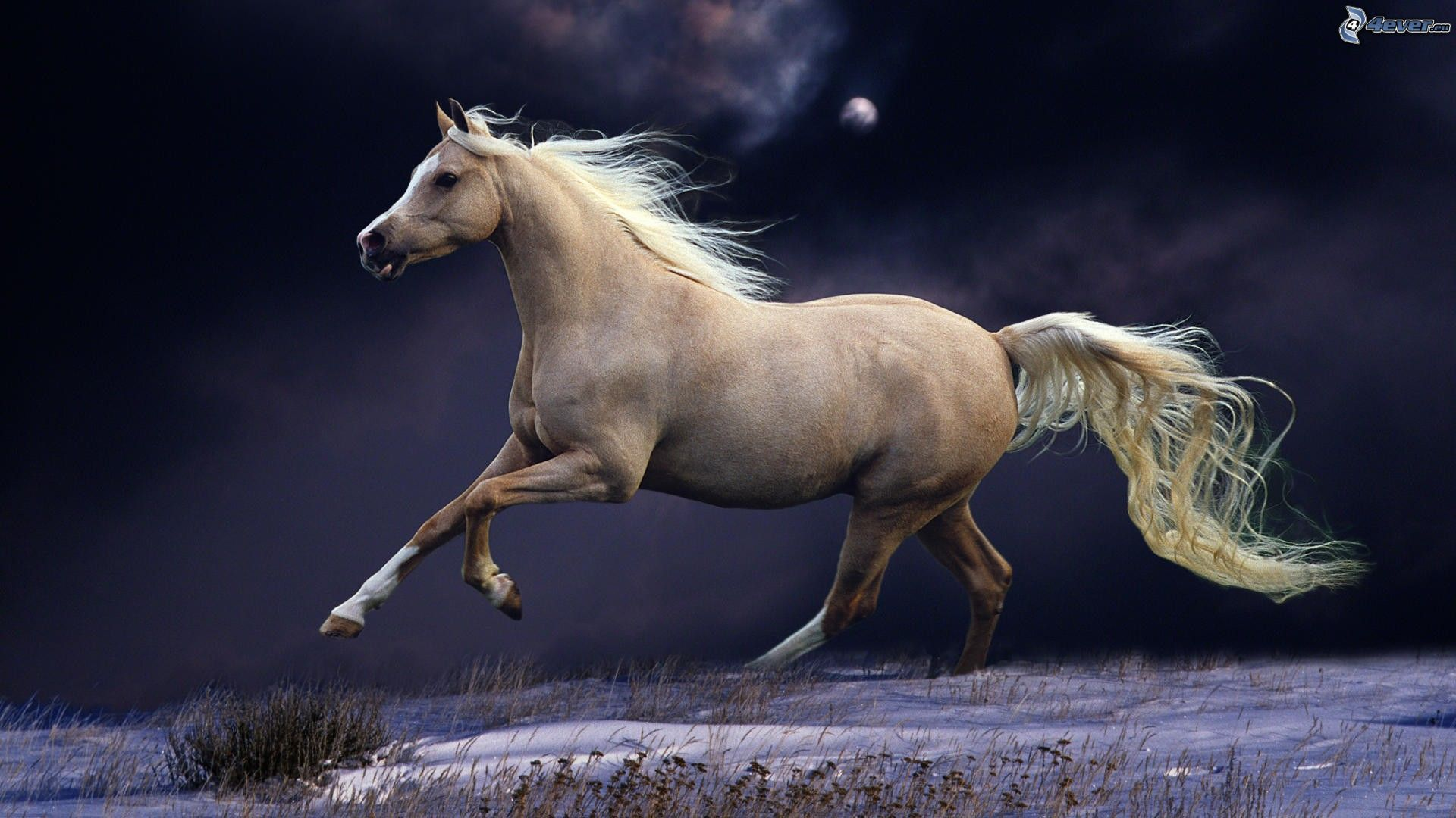 caballos pura sangre corriendo en el mar - Buscar con Google ...