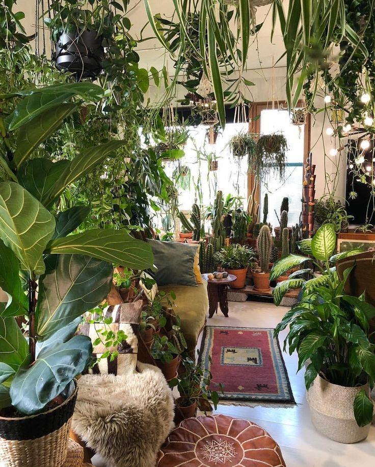 Mylushlifestyle Com Home Garden Health Beauty It S A Lifestyle Create Mylushlifestyle Com In 2020 Zimmerpflanzen Pflanzen Zimmer Badezimmerpflanzen