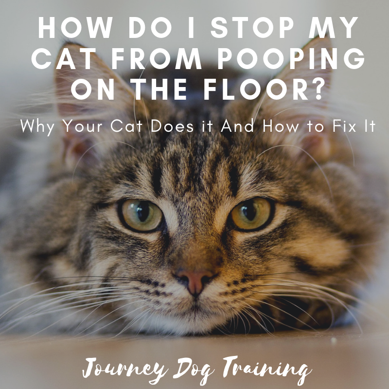 Why Is My Cat Pooping on the Floor? Cats, Cat pee smell
