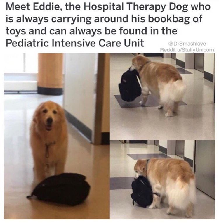 Eddie The Therapy Dog 3 This Is So Pure 3 With Images Cute